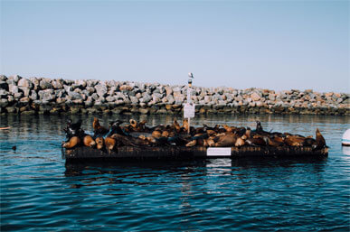 environmental tours with Pacific Ocean Charters